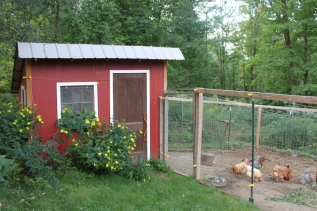 chicken house with sunflowers