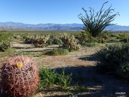 Tubb Canyon; barrel cactus and ocotillo