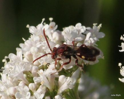 wasp on valerian