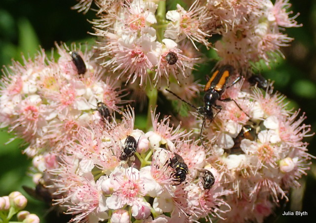 beetle and bees
