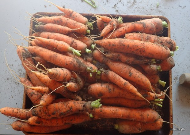 carrots (Napoli and Yaya)
