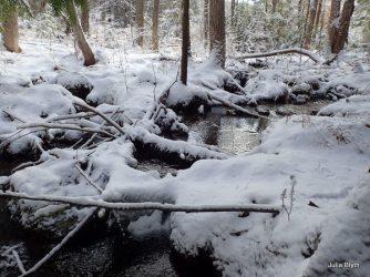 beaver stream