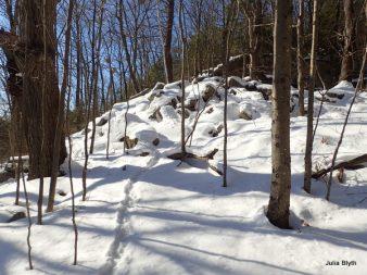 porcupine trail near the quarry
